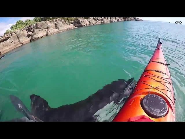 Kayaker and Orca