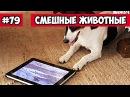 Смешные животные - кот и планшет Bazuzu Video ТОП подборка 79, декабрь 2017