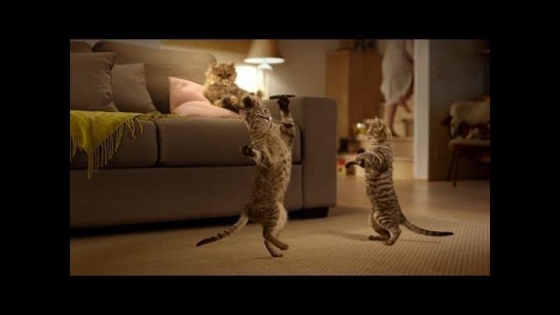 Кошки танцуют под музыку