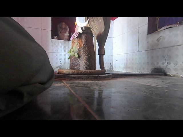 35 Гирнар. Храм Лингама Кришны. Перч в отключке.