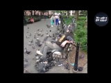TRY NOT TO LAUGH or SMILE Watching Funny Animals ? If You Laugh You Lose ★43 (Animal Edition)