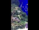 S.E.A Aquarium Singapore 🇸🇬