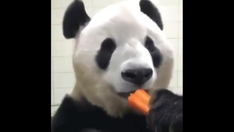 Морковочка ням нам