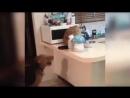 Приколы с животными Подборка смешного видео с котами.