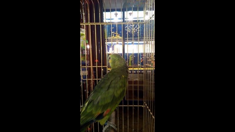 Акватика. Пафосный попугай