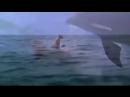 Дельфин и собака Настоящая дружба