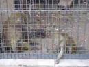 Обезьяны в зоопарке