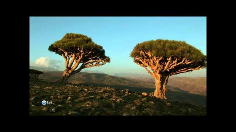 03. Чудеса природы. Йемен. Оман.