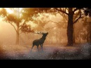 Celtic Gate – Into a magical forest | Celtic Music