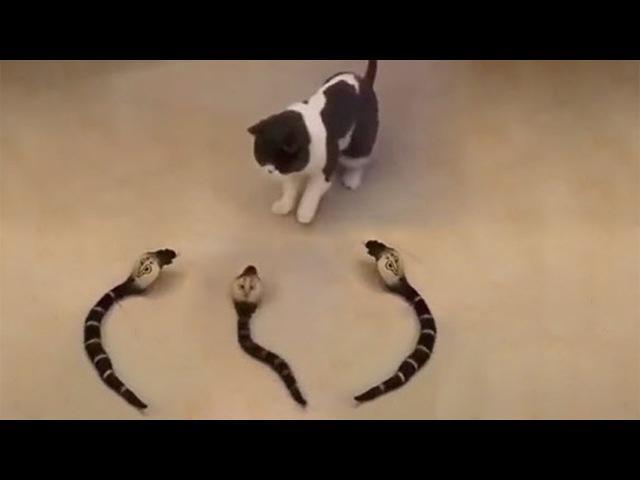 おかしい猫 かわいい猫 おもしろ猫動画 HD 109