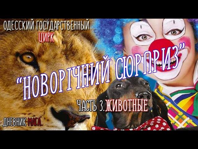 Одесский цирк. НОВОГОДНИЙ СЮРПРИЗ ОТ 23.12.2017 часть 3. Животные