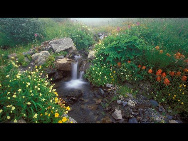 5 часов! Пение птиц Звуки природы Журчание ручья для отдыха расслабления и релак ...