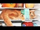 Спецвыпуск Про Животных Приколы с Котами Смешные кошки приколы про кошек и кот ...