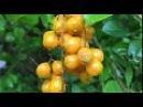 Frutos Jardim Tiguera 110 Juiz de Fora Minas Gerais Brasil IMG 2372 8 1 MB 10h23 11mar18