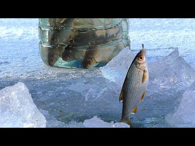 Первая рыбалка на льду 2018. НАКОНЕЦ-ТО! Зимняя рыбалка. Ловля живца для жерлиц на щ...