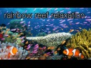 3HRS Stunning Underwater Footage Relaxing Music French Polynesia Indonesia 4K Upscale
