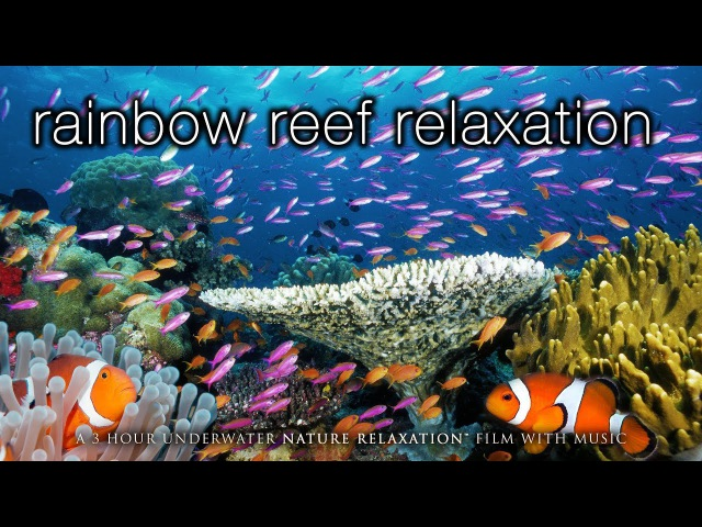 3HRS Stunning Underwater Footage Relaxing Music | French Polynesia, Indonesia 4K Upscale