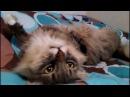 Смешные кошки Приколы КОТ 0075