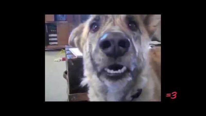 RWJ по версии Кураж Бамбей Говорящий Пёс