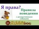 Маленькие собаки (декоративные собаки - шпицы, йорки, и т.д) правила поведенияна улице
