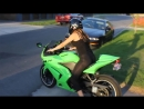 AZIAN BIKER GIRL - Ninja Kawasaki 250 R - Yoshimura Exhaust