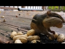 Белка жрет орехи как это мило просто обосраться я какал и плакал