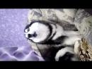 Василиса волчара