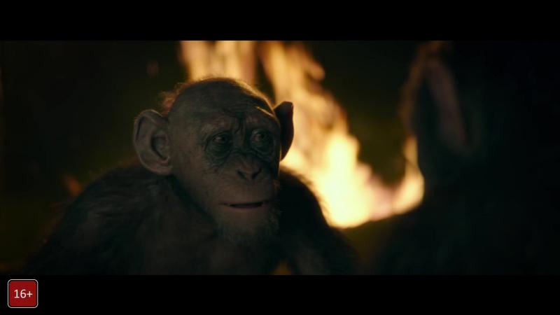 Смотрите фильм Планета обезьян: Война 16 в Дом Кино Шевченко