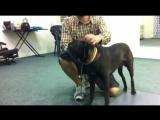 Намордник для собак Baskerville Ultra Muzzle