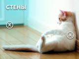 Что нужно учесть при ремонте, если у вас есть домашние животные?
