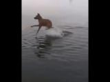 Когда тебя что-то коснулось в воде...
