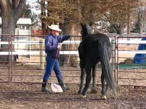 Toothless 8 , Bucking Stock Rescue, Intro to the saddle, Sean Davies, Coloradoreinsman