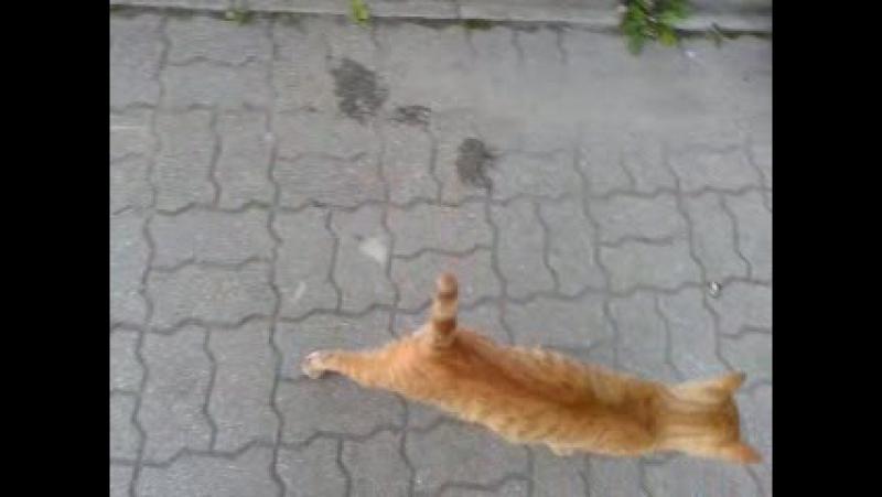 Рыжий кот у аптеки на Громовой