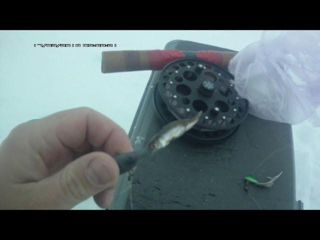 Ловля судака на мороженую тюльку или на живого живца Что лучше