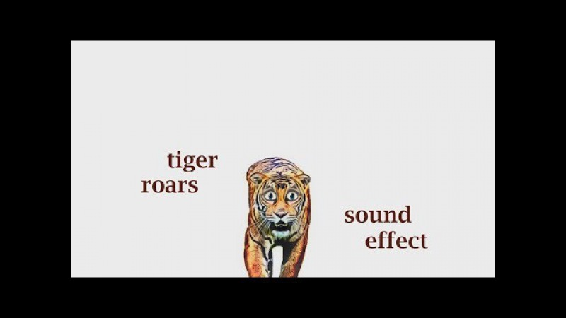 The Animal Sounds Tiger Roars - Sound Effect - Animation