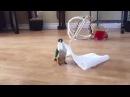 Little Irish Bird Dancing on Paper Towel