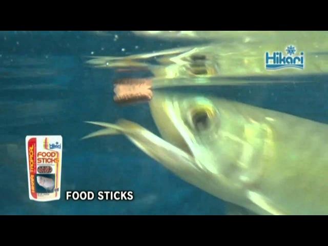 Having Hikari FOOD STICKS