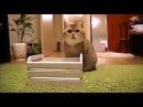 Самые милые и няшные котики!