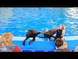 Тренер - Мария и морские котики: Митя и Маркиз