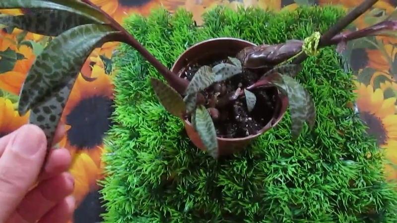 Уникальное растение-дружная семейка !