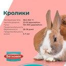 Питомцы-грызуны от мышей до кроликов(да, мы знаем, что кролики — не грызуны, а зайцеобразные…