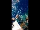 Подводный мир у берегов Красного моря