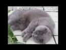 Смешные кошки приколы про кошек и котов 2017 32 Позитивные и очень красивые киски