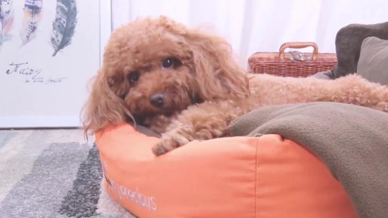 HOOPET Полностью съемный моющийся Pet кошка собака кровать мягкие Подушка и Одеяло дом любимчика подарок