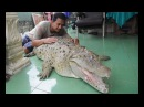 Our Family Pet Is A Six Foot Croc | BEAST BUDDIES