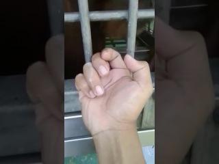 Сунул руку в клетку обезьяне