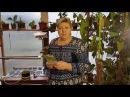 Рассада быстро! Новый способ выращивания огурцы, помидоры, баклажаны, зелень. часть 1