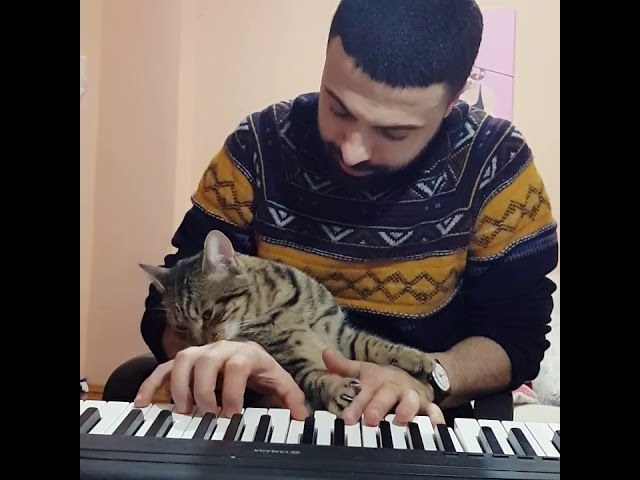 Piano sevdalısı, dünya tatlısı evladım benim 😺🎹❤ . My piano lover, sweet child 😺🎹❤
