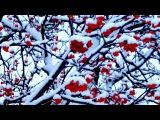 Рябина в Снегу. Заснеженная Рябина. Красная Рябина в Снегу. Зимняя Рябина. Футажи...