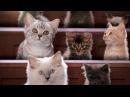 Академия котят полное собрание рекламы Вискас